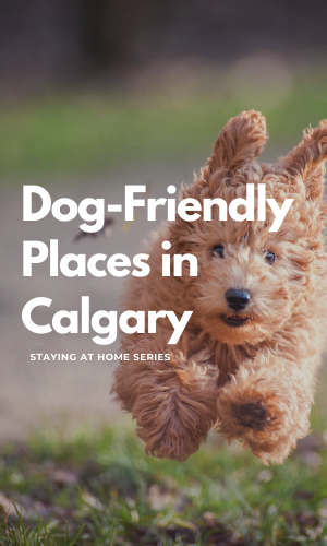 dog_friendly_places_in_calgary