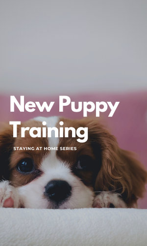 new_puppy_training